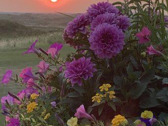 Sunbelt - Michael Shelby
